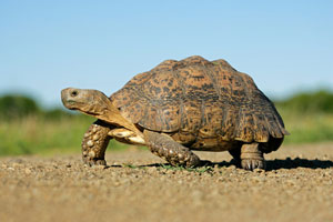 See tortoises wandering around in Greece during your holiday
