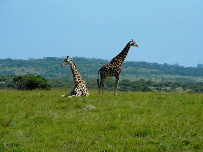 Go on safari in South Africa